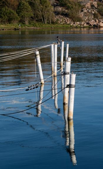 Mooring poles with owl decoy 4