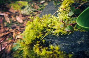 Moss among rocks and bark