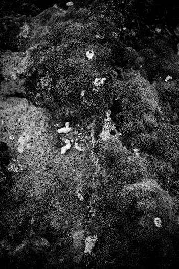 Moss and Rocks Texture