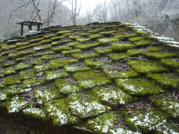Moss covered rooftop