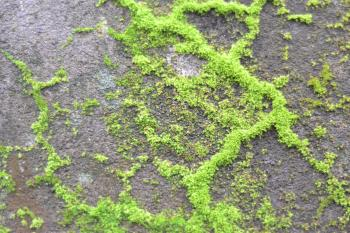 Moss in the wall