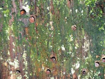 Mossy Damaged Tree