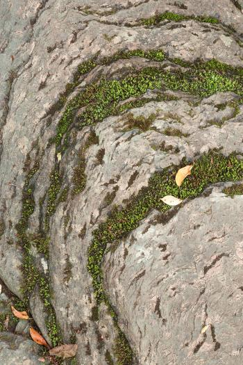 Mossy Stone Curves