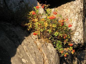 Mountain Berries