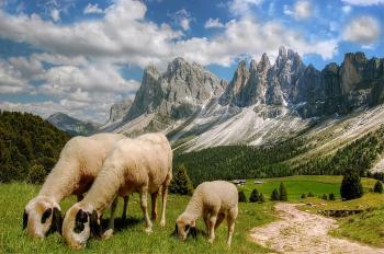 Mountainous Herd