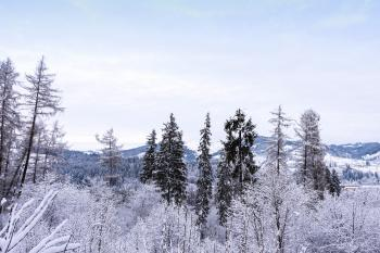 Mountains view with frozen forest and snow