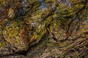 Muir Wood Impressions