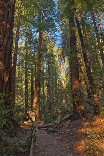 Muir Woods Trail - HDR