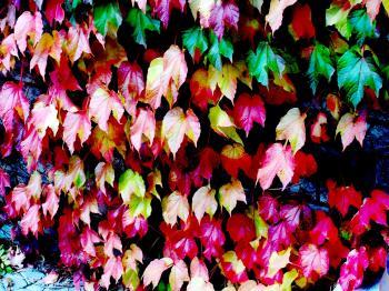 Multy Coloured Foliage