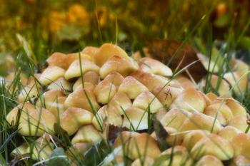 Mushroom on Green Grass