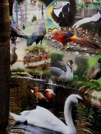 My Birds