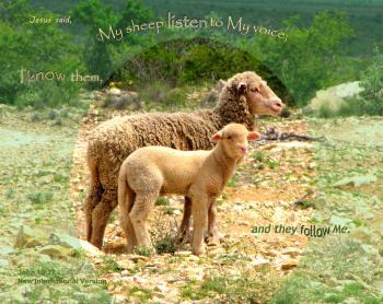 My Sheep Follow Me