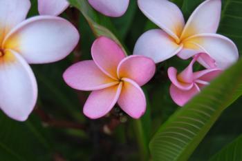 Namibian blossoms