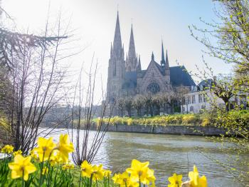 Narcisses aux abords de l'Église Saint-Paul de Strasbourg