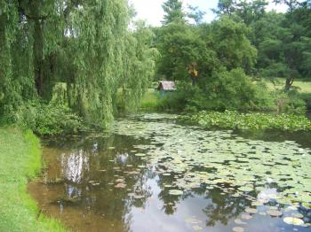 Natural Beauty of Hidden Lake Gardens