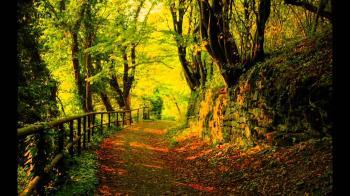 scene of nature