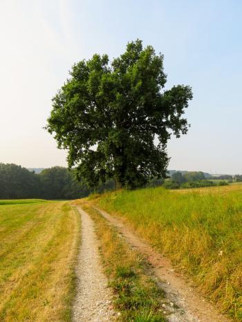 Near the Farm