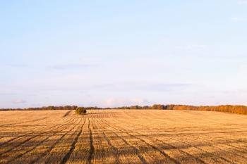 Newly cut autumn wheat field in a village in Moldova