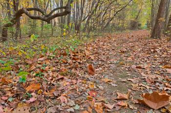 North Point Fall Trail - HDR