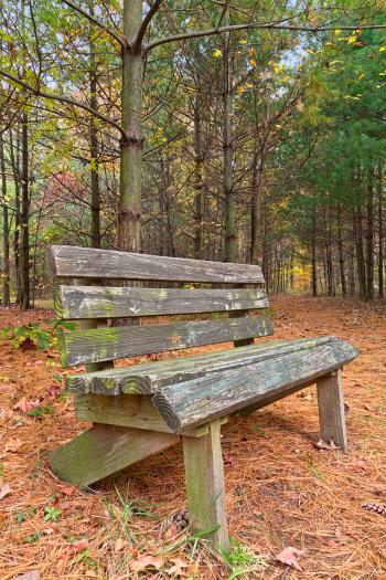 North Point Pine Trail - HDR