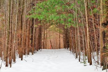 North Point Winter Pine Trail - HDR