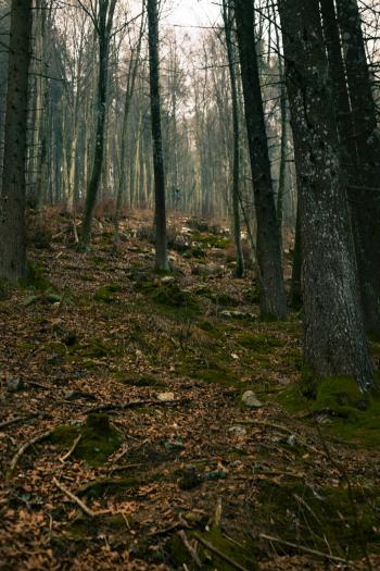 Oak Tree Lot