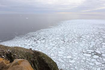 Ocean Ice at Cape St. Marys