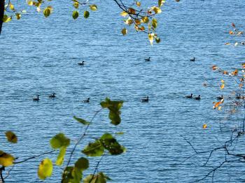Oiseau (Bernache Du Canada) 413