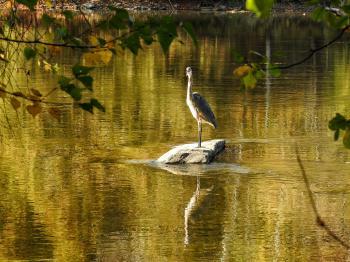 Oiseau (Grand Héron) 239