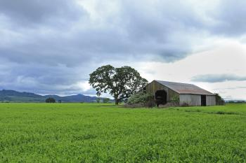 Old barn, stormy skies, green field, Oregon