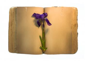 Old book & flower