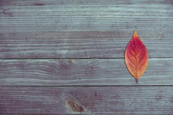 Orange and Red Leaf in Brown Wood Plank