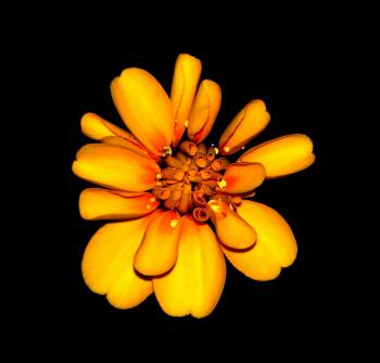 Orange and Yellow Petaled Flower Hd Photography