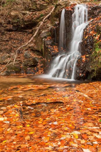 Orange Grove Waterfall