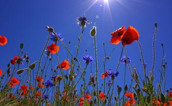 Orange Multi Petaled Flower Under Blue Sky during Daytime
