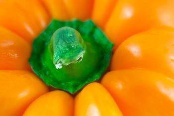 Orange Pepper Macro