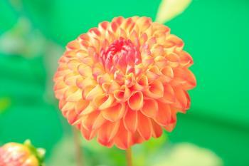 Orange Petaled Flower Close-up Photo