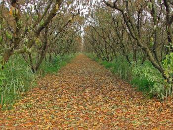 Orchard in the Fall