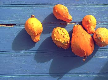 Organic colorful pumpkins on blue wooden background