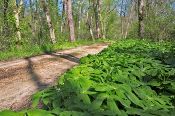 Organic Trail