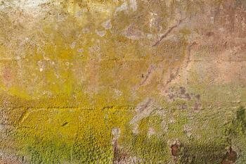 Organic Wall Decay - HDR Texture