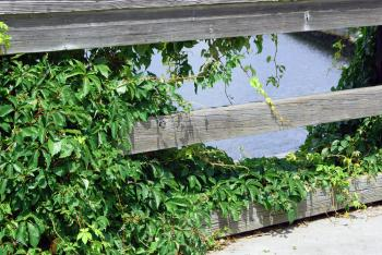 Over-Grown Deck