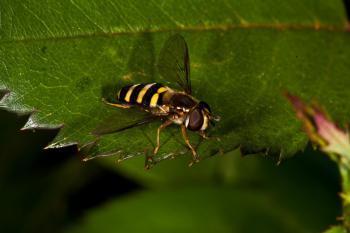 Overfly macro