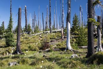 Pacific Crest Trail near Hoodoo, Oregon