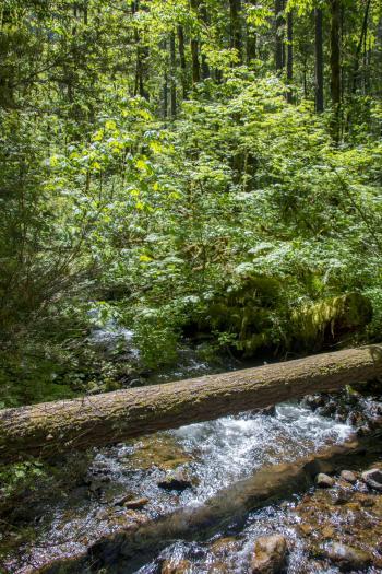 Pacific Crest Trail, Oregon