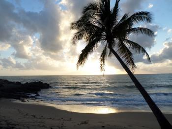 Palm Tree on the Beach