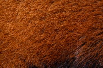 Panda fur