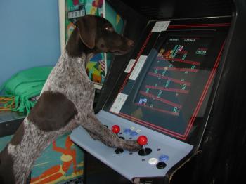 Paris playing Pinball