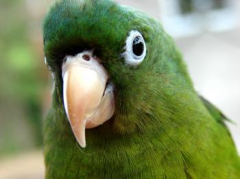 Parrot Kid
