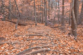Pastel Fantasy Trail